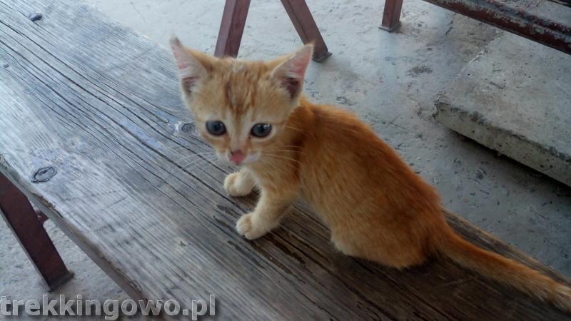 Mołdawia - Dzień 8 Rumunia rudy kotek