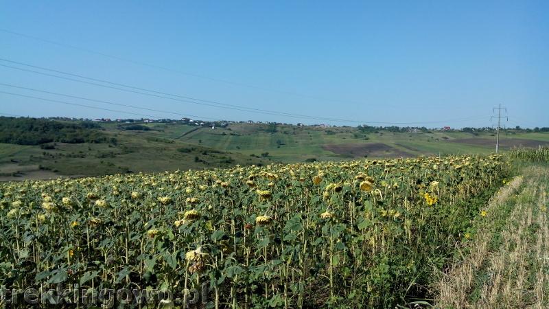 trekkingowo Wyprawa rowerowa Mołdawia Rumunia słoneczniki