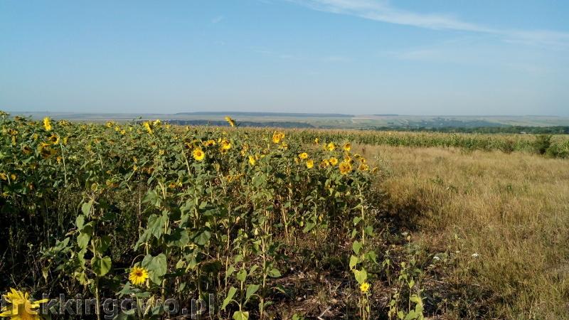 Mołdawia - Dzień 3 słoneczniki trekkingowo