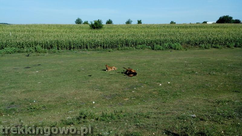 Polska wieś Strycza - Wyprawa rowerowa Mołdawia 2015, dz.4 konie zabawa trekkingowo