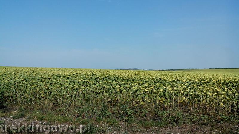 Mołdawia - Dzień 4 słoneczniki trekkingowo