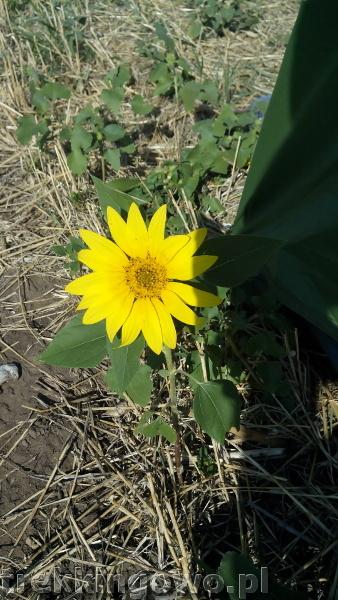 Mołdawia - Dzień 8 kwiatuszek