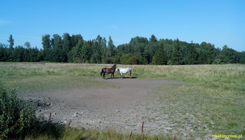 Wyprawa Rowerowa Inlanty 2015. Kieś i pierwszy nocleg na polu konie