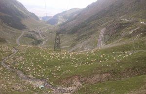 Rumunia, czy nadal dzika transfogaraska owce trekkingowo
