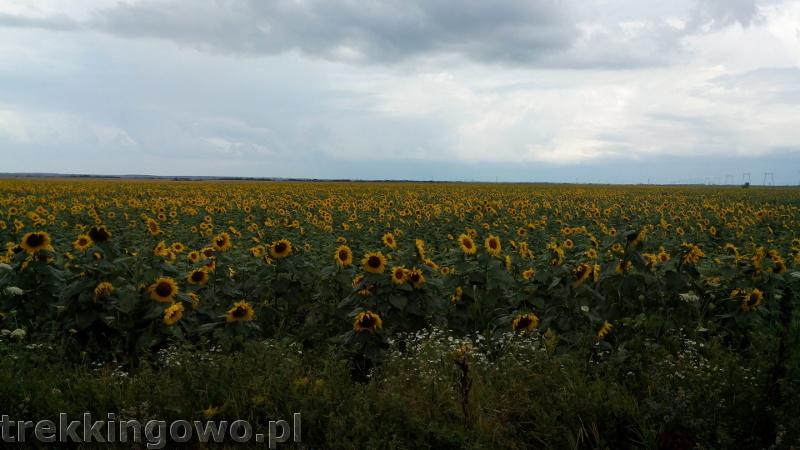 Rumunia, czy nadal dzika słoneczniki 2 trekkingowo