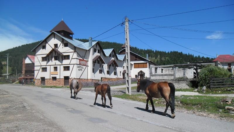 Rumunia, czy nadal dzika konie trekkingowo